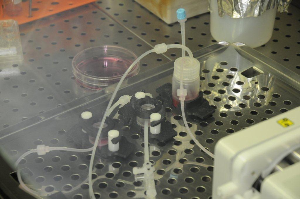 Sistema di coltivazione di cellule nel modello 3D in dinamico